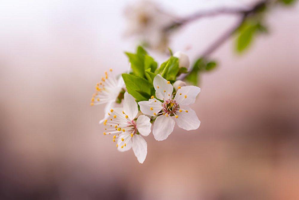 пролетно почистване